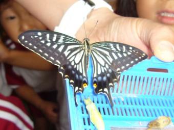 立派なアゲハ蝶になりました!