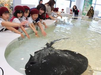 卒園遠足~海遊館に行きました!