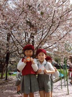 お庭の桜も綺麗ですね