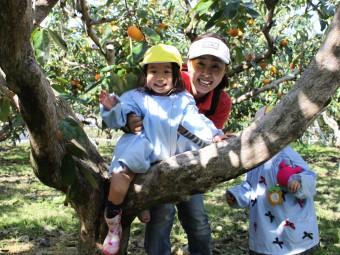 柿畑で木登りもしたよ!
