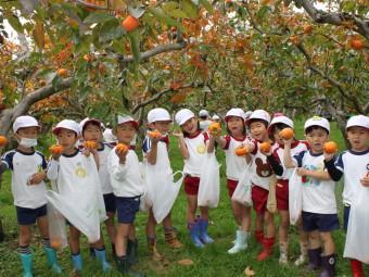 大きい柿が採れました!
