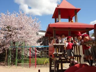 お庭の桜も綺麗です