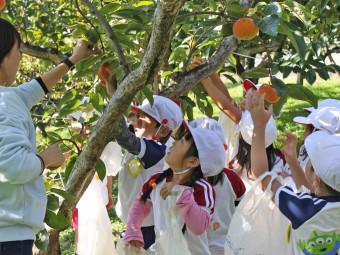 有名な大枝の柿をクルクル~